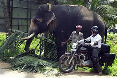 Motorcycle Tour: South India