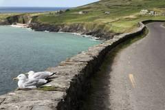 Motorcycle Tour: Ireland's mild south