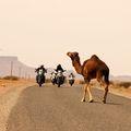 Reisen und Touren: 10 Tage Marokko Rundreise